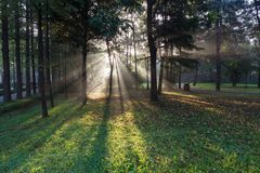 Утро Forest Park стоковое изображение rf
