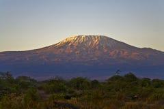 утро kilimanjaro Стоковые Изображения RF