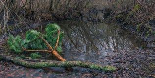 Утро rill леса весной стоковая фотография