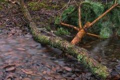 Утро rill леса весной стоковые изображения