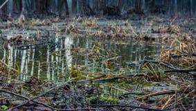 Утро rill леса весной стоковая фотография rf