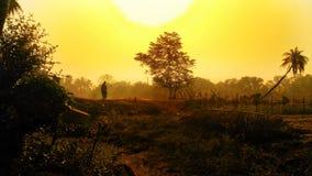 Утро Sun стоковое изображение rf