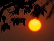 Утро Sun Стоковые Фотографии RF