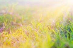 Утро Sun Стоковая Фотография RF