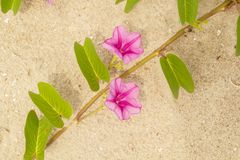 утр-слава пляжа Стоковое Изображение RF