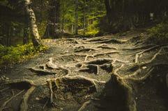 Ухабистый путь вполне корней стоковое изображение rf