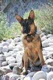 Ухищренная собака на побережье Стоковые Фото
