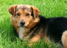 ухищренная собака Стоковое фото RF