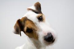 ухищренная собака стоковое изображение rf