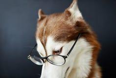 ухищренная собака Стоковые Изображения RF