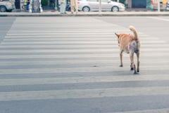 Ухищренная тайская дорога скрещивания собаки с crosswalk Стоковое Фото