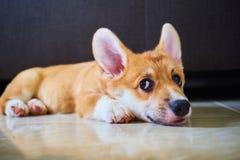 Ухмыляясь собака Стоковое Изображение RF