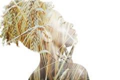 Ухо двойной экспозиции пшеницы стоковые фото