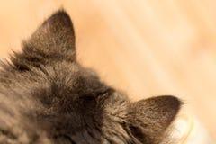 Ухо в меховом коте стоковое изображение rf