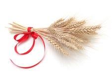 Ухо пшеницы стоковая фотография rf