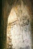 Ухо Dionysius стоковая фотография rf