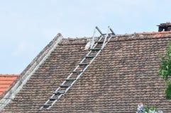 Ухудшенная крыша с лестницей стоковые фото
