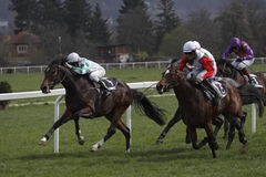 участвовать в гонке гонки prague лошади arqana Стоковые Фотографии RF