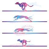 Участвовать в гонке и идущие собаки Стоковое Изображение
