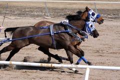 Участвовать в гонке колесницы Стоковые Фотографии RF