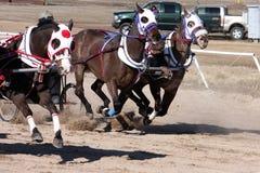 Участвовать в гонке колесницы Стоковая Фотография