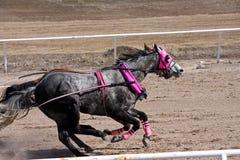 Участвовать в гонке колесницы Стоковое Фото