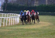 участвовать в гонке лошадей Стоковые Фотографии RF