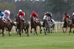 участвовать в гонке лошадей стоковое изображение rf