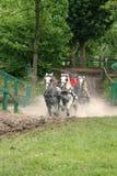 участвовать в гонке лошадей Стоковая Фотография RF
