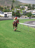 участвовать в гонке Маврикия лошади Стоковые Изображения