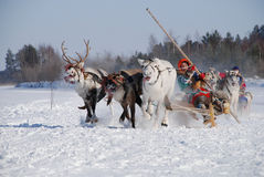 участвовать в гонке оленей стоковые фото