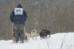 Участвовать в гонке собак стоковые изображения rf