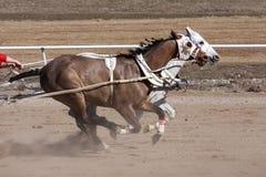 Участвовать в гонке Chariot Стоковая Фотография