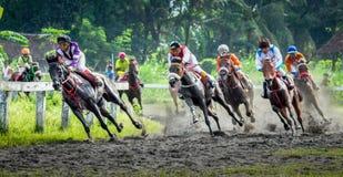 Участвуя в гонке лошадь Стоковое Изображение