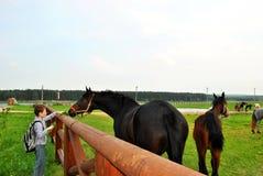 Участливый молодой человек обрабатывает лошадь с одуванчиками Стоковые Фотографии RF