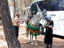 Участники в реконструкции рожков сражения Hattin в 1187 проверках распорка warhorse перед кампанией около Тибра стоковые фото