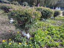 Участок сада 59 модальностей участка 5 стоковое фото rf