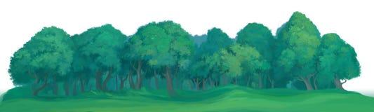 Участок середины дерева Стоковая Фотография