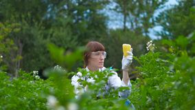 Ученый впрыскивая химикаты в зеленый болгарский перец GMO Концепция для химической еды GMO или GM видеоматериал