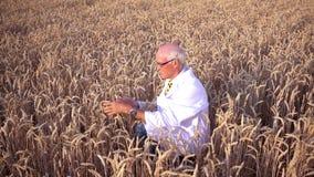Ученый исследуя новые Ны тип зерна, урожаев и заводов сток-видео