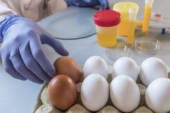Ученый на лаборатории расследует кризис причиненный очковтирательством загрязненных яичек с fipronil Стоковое фото RF