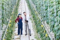 Ученый работая на промышленной плантации Стоковое Изображение