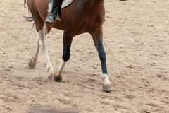 Учить верховую езду Инструктор учит предназначенному для подростков Equestrian стоковая фотография