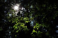 лучи ветвей греют на солнце вал Стоковое Изображение RF