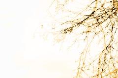 лучи предпосылки закрывают вал валки вверх Стоковые Изображения