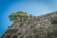 Учреждение башни замка замка Эдо-Джо, Японии Стоковая Фотография