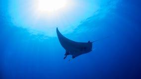 луч океана manta Мальдивов atoll addu индийский Стоковая Фотография