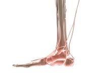 ушиб ноги Стоковое Изображение