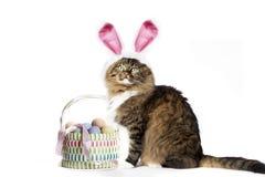 Уши зайчика кота нося Стоковое Изображение