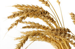 уши изолировали белизну пшеницы Стоковые Изображения